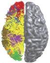 cat cortex