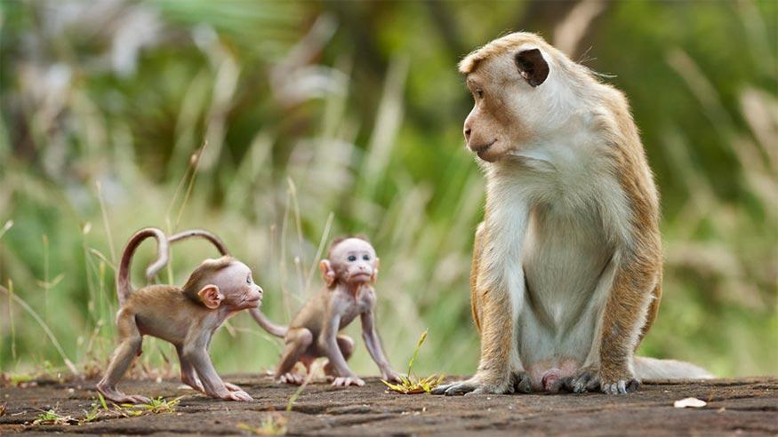 monkeykingdom01